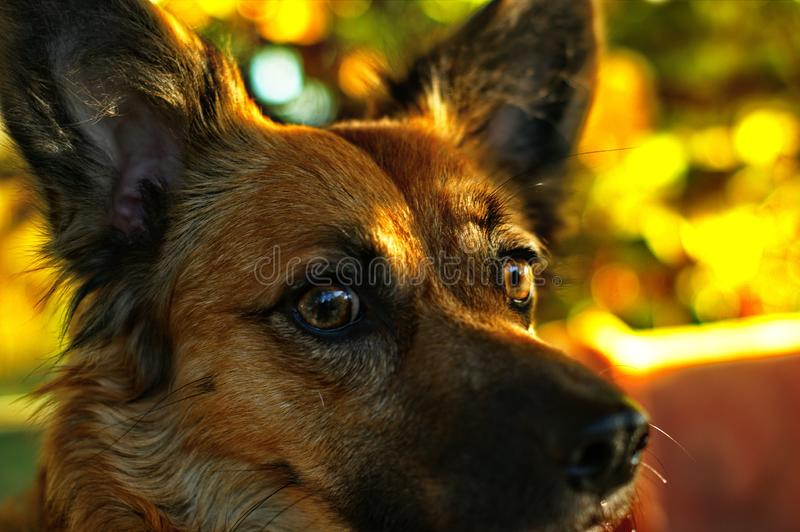Close up on mixed-breed mongrel dog sitting. In chair in sun light royalty free stock image