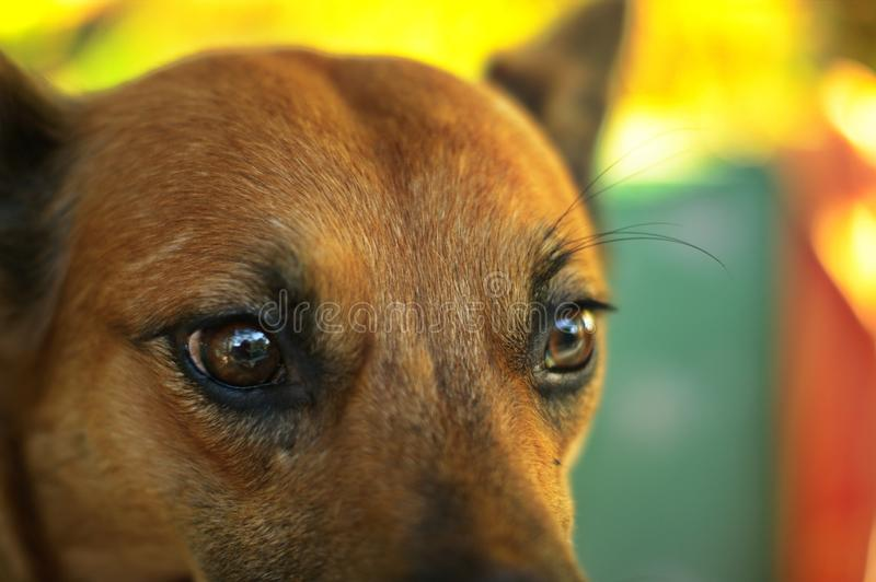 Close up on mixed-breed mongrel dog sitting. In chair in sun light stock photo