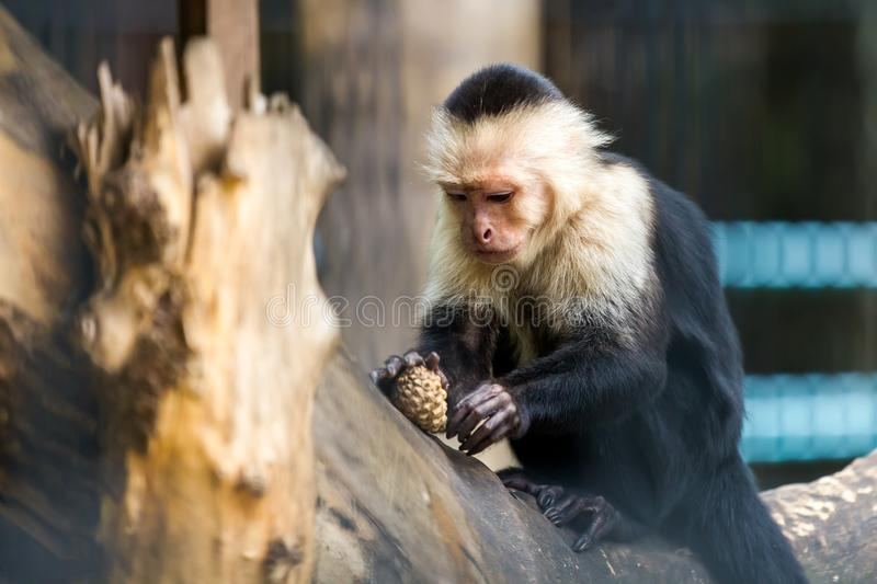 A close-up of a monkey stock images