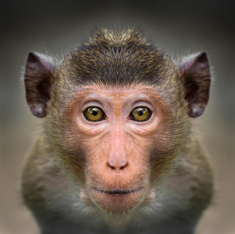 Close-up of monkey`s face stock image