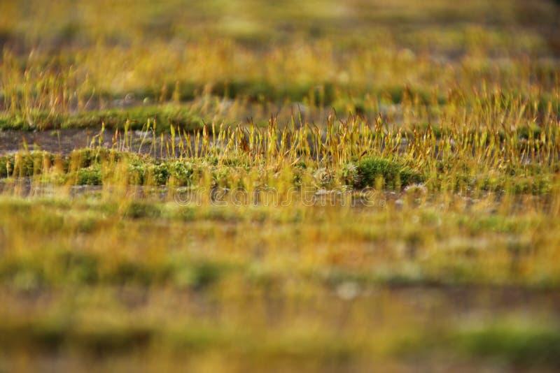 Close up of moss. On railing of a wooden bridge in the Groene Hart Park in Nieuwerkerk aan den Ijssel, the netherlands royalty free stock photos