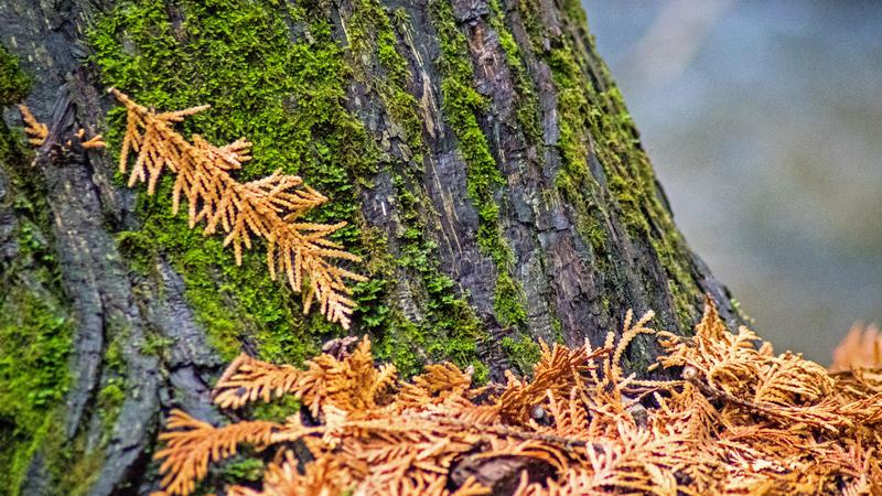 Close-up Of Moss Covered Tree Trunk royalty free stock images