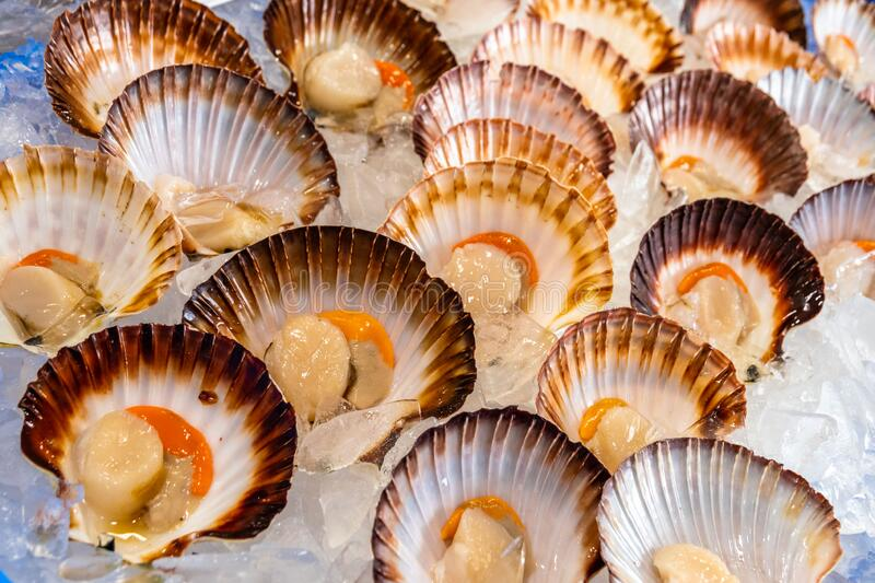 Close-up of multiple raw scallops in Sydney fish market stock photography