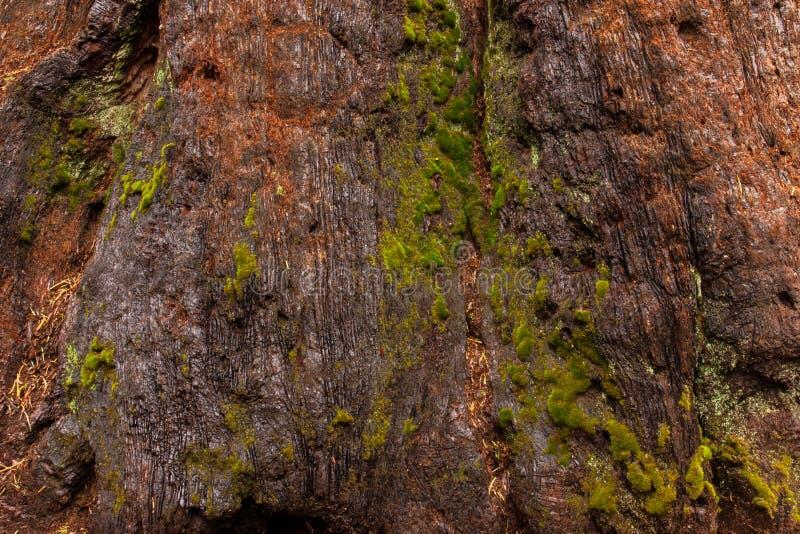 Download Close up musgoso da casca foto de stock. Imagem de outdoor - 80102106