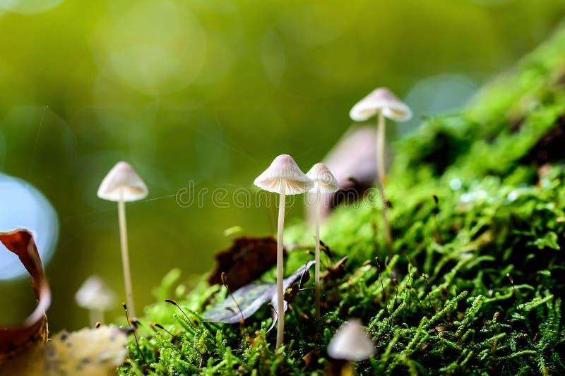 Close-up of Mushroom stock images