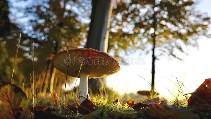 Close-up of Mushroom Growing on Field stock image
