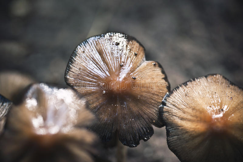 Close up of mushrooms. Close up with great details of mushrooms in the grass stock photo
