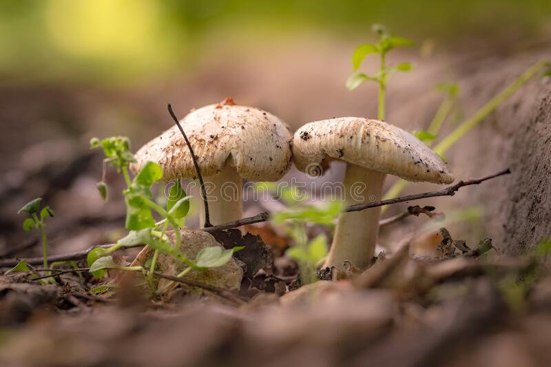 Close up of mushrooms on ground stock images