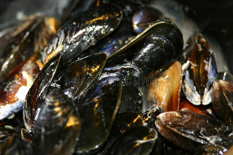 Close up of mussels stock photography