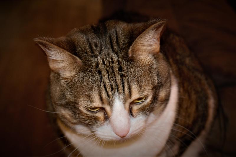 A close up of my older tabby cats face royalty free stock photography