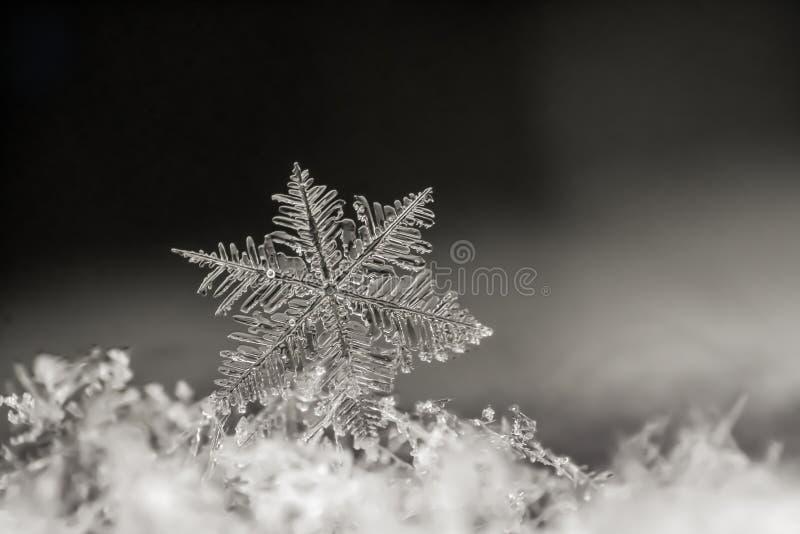 Close-up natural do floco de neve inverno, frio foto de stock