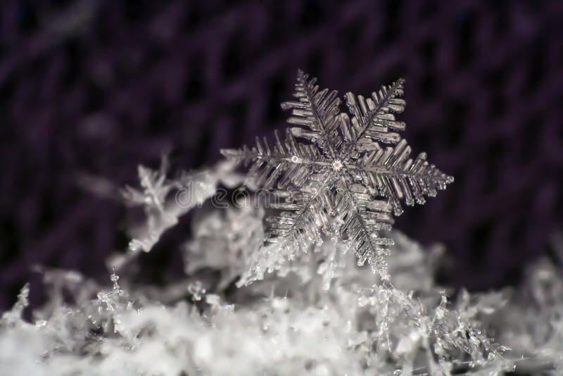 Close-up natural do floco de neve inverno, frio imagem de stock