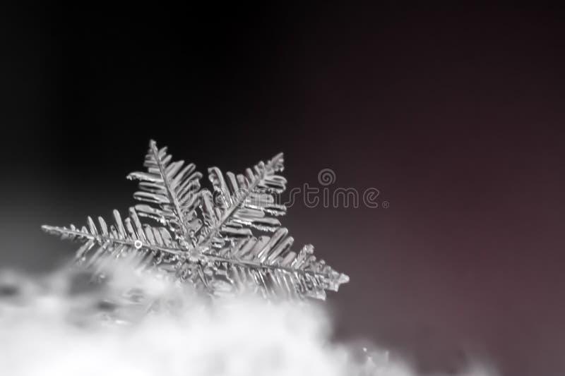 Close-up natural do floco de neve inverno, frio imagens de stock royalty free