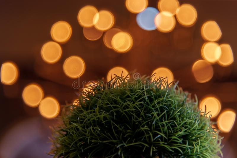 Close up of natural green grass for decoration and blurred light bokeh background in night .Home interior design decoration royalty free stock images
