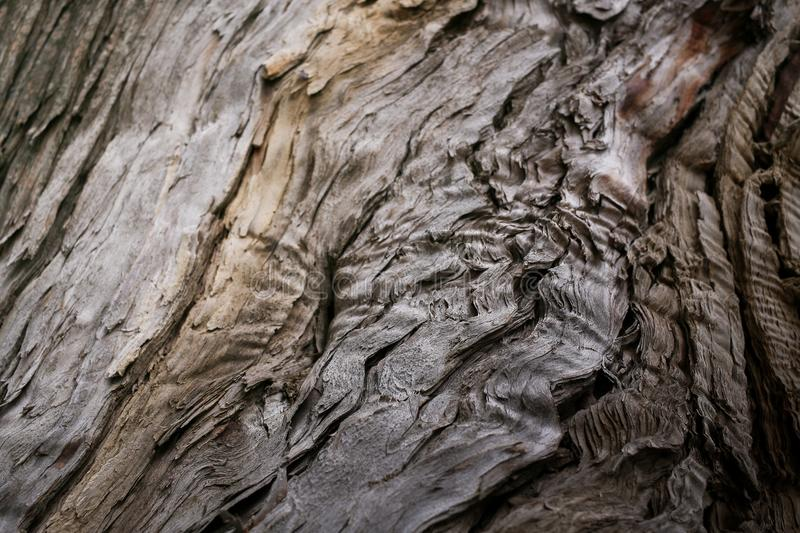 Close-up natural texture of old falling apart rotten wood. Selective focus. stock photo