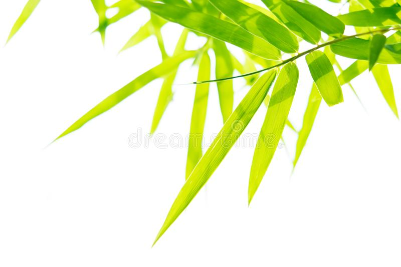 Close up nature of green leaf in park, natural green plants macro using as a background or wallpaper stock photos