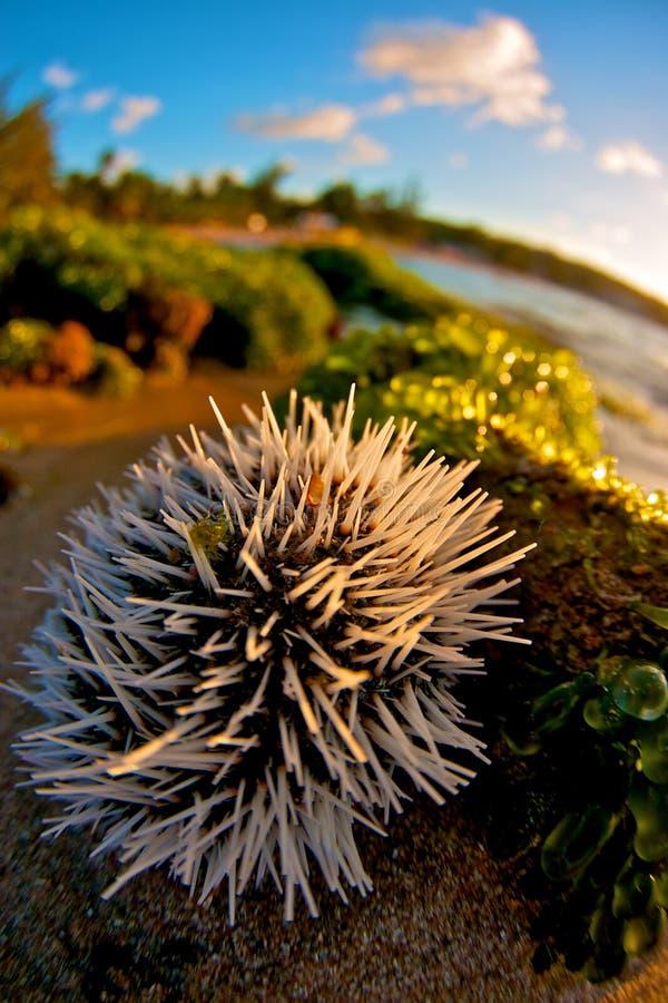 Close up nature royalty free stock image