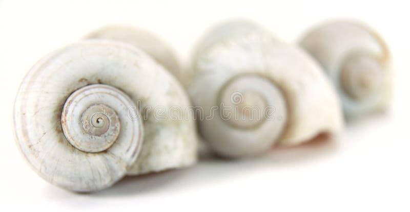 Close up nautilus shell. Close up row of nautilus shell stock photos