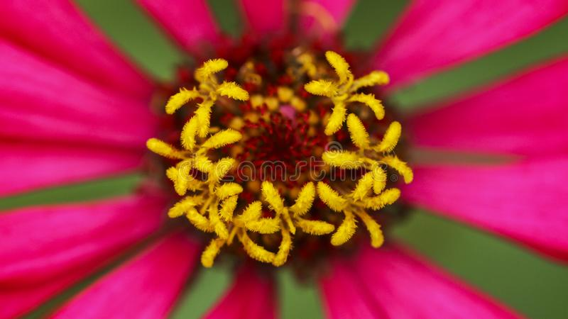 Close up of nectar flower. Collection of photos of the universe stock images