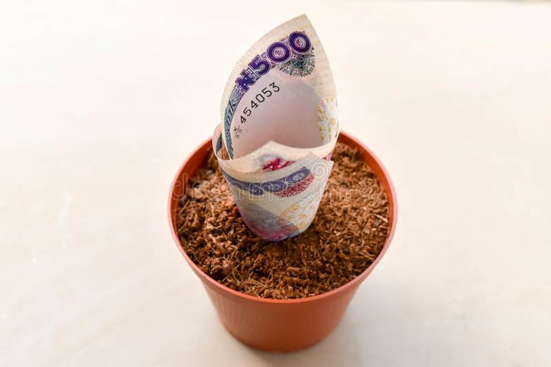 Close up Nigerian five hundred naira notes in compost flower pot stock photos