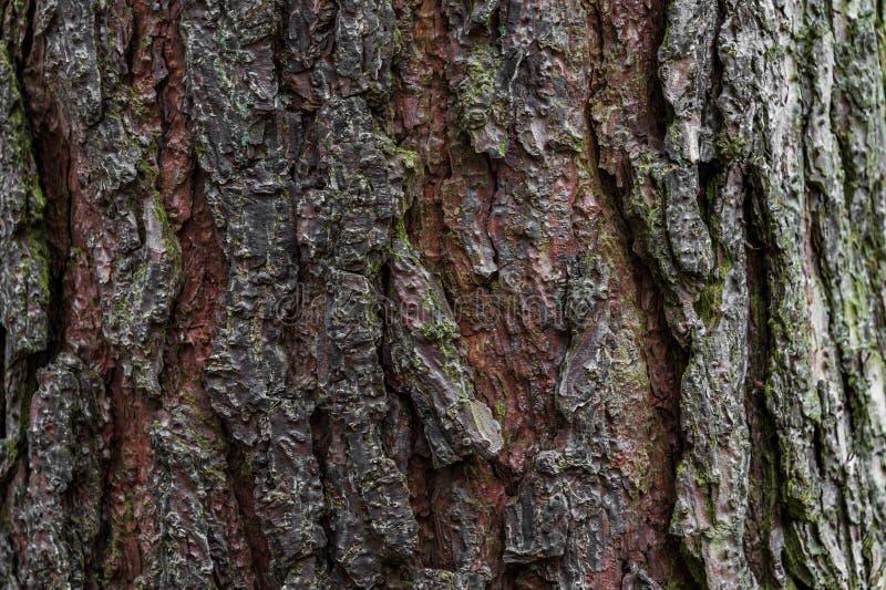 Close up of a Oak Tree Trunk stock photo