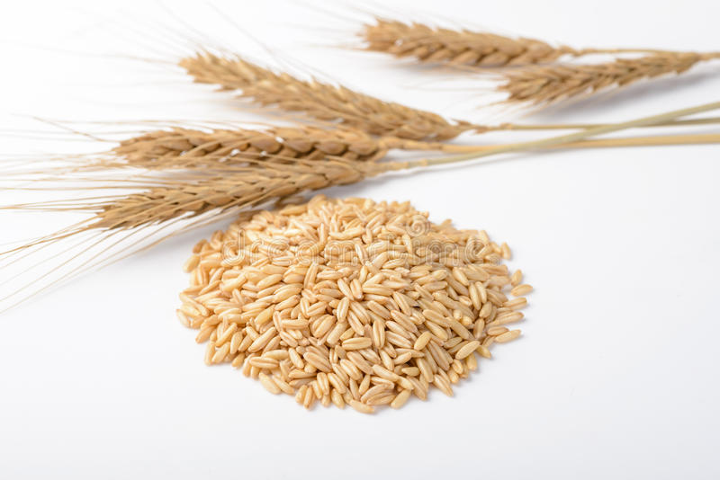 Close up of oats royalty free stock images