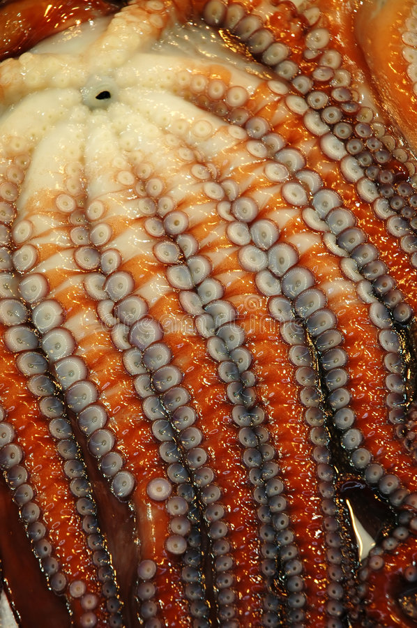 Download Close up of Octopus stock photo. Image of marine, alien - 3579720