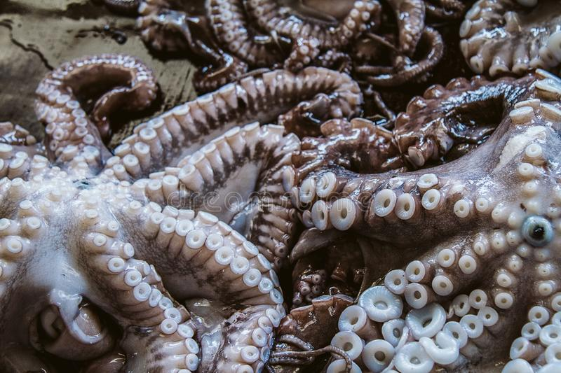 Octopus tentacles royalty free stock photo