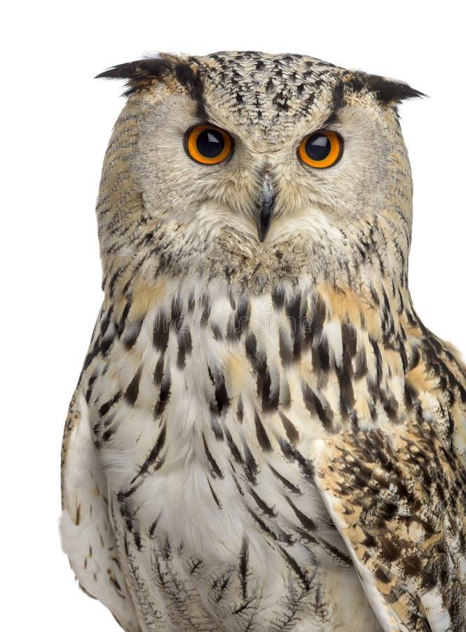 Free Close-up Of A Siberian Eagle Owl - Bubo Bubo Stock Photo - 63253920