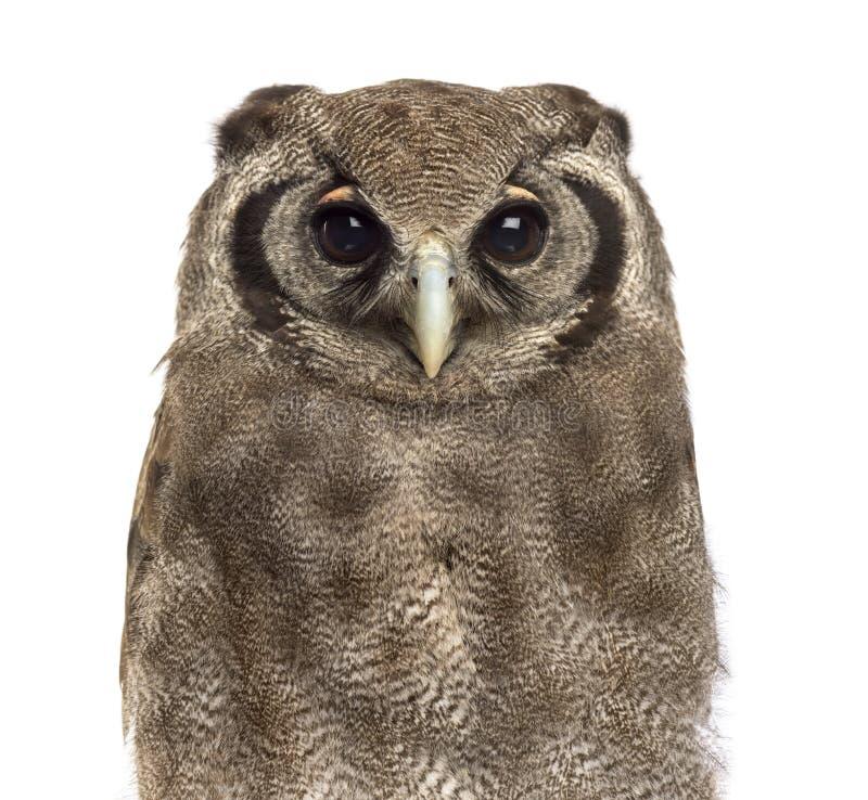 Free Close-up Of A Verreaux S Eagle-owl - Bubo Lacteus Stock Photo - 63253530