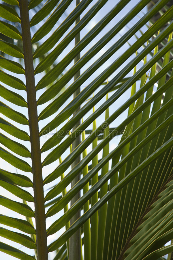 Free Close-up Of Palm Frond Against Blue Sky. Royalty Free Stock Photography - 2037697