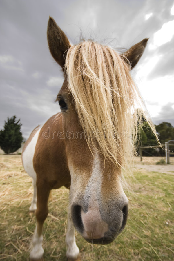 Free Close Up Of Pony Royalty Free Stock Image - 4531986