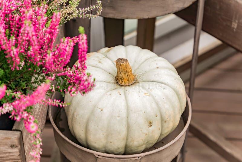 Close up og gray decorative pumpkin in metall basket. Harvest festival or farmers market.  royalty free stock images