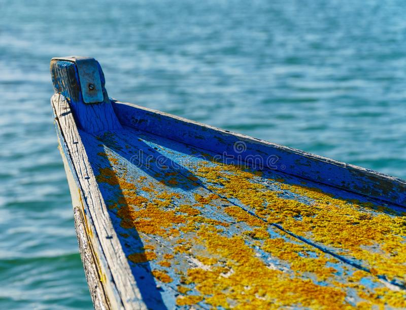 Close-up on old boat hull with golden shining lichens stock images