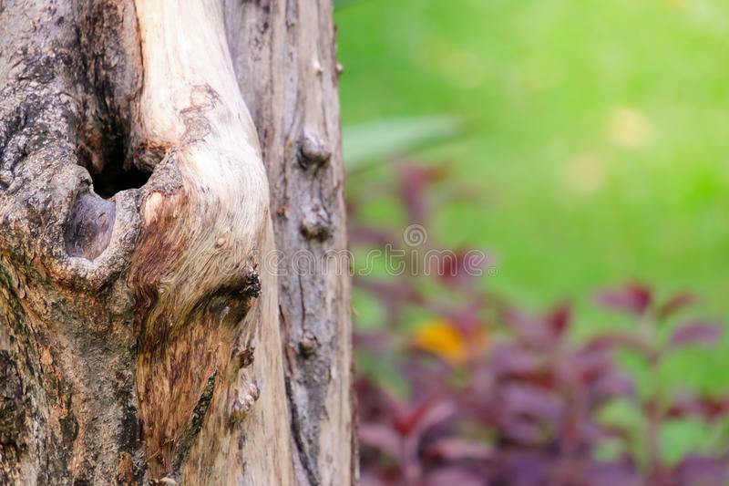 Close up old tree stumps with green grass background. stock images
