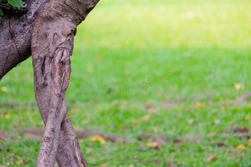 Close up old tree stumps with green grass background royalty free stock images