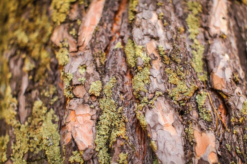 Close up Old Tree surface For background image. macro image of bark texture with moss and cracks stock photos