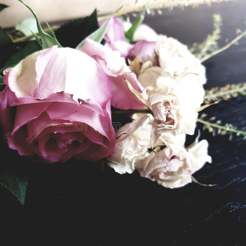 Close up on old and wilted large pink rose and small white roses flower pedals lying on the ground royalty free stock images