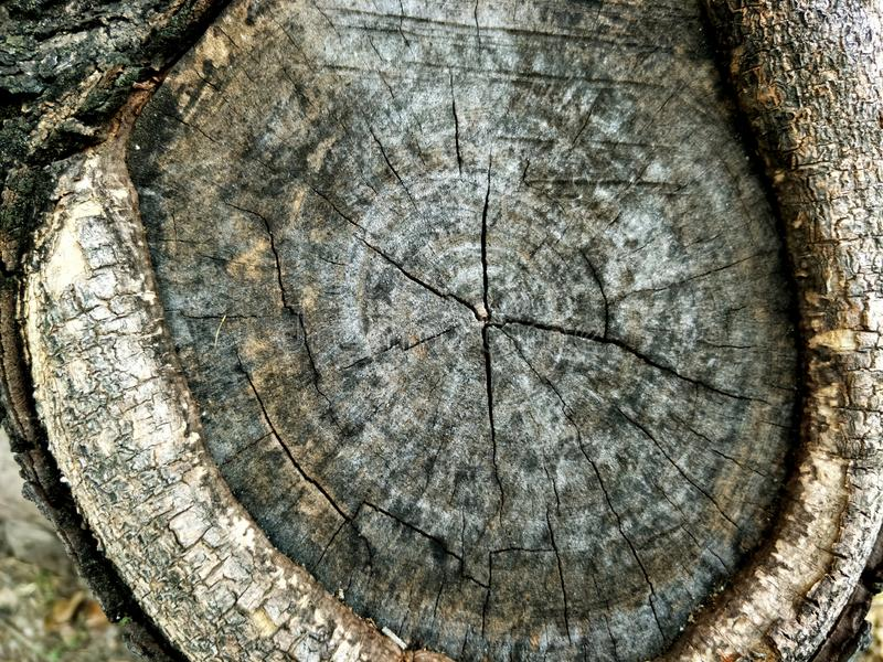 Close up old wood texture of old bark wood use as natural background royalty free stock photos