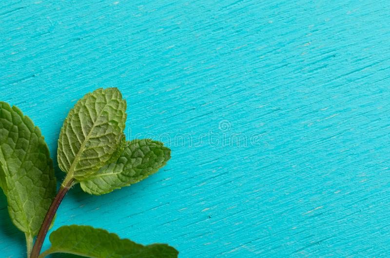Close-up one green mint sprig on turquoise background. royalty free stock photo