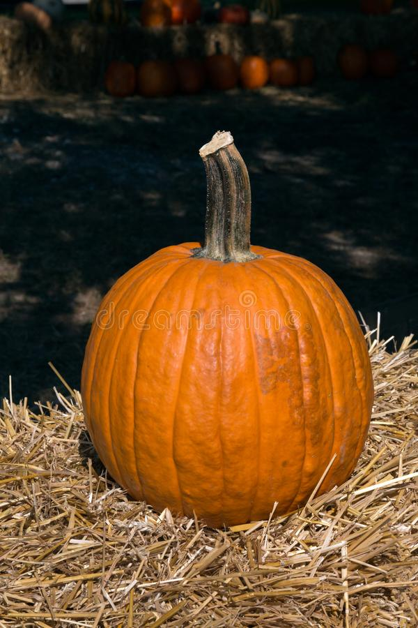 Close-up of One Pumpkin on Haybale royalty free stock photos