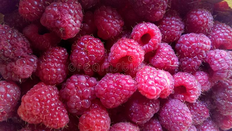 Close-up of one of raspberries stock photos