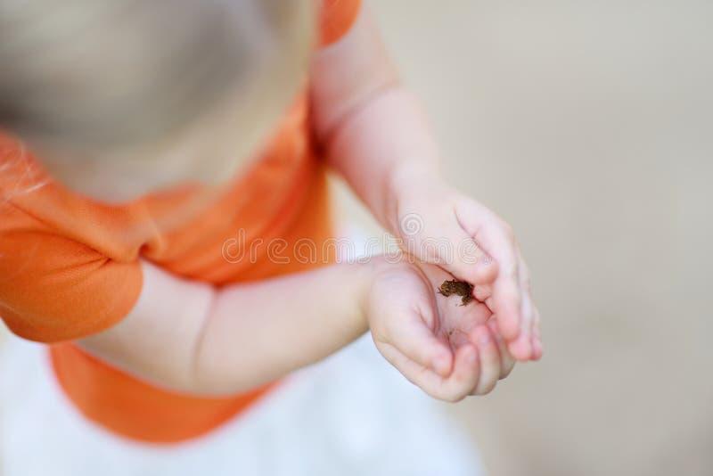 Close-up op een kind die weinig babyfrog houden royalty-vrije stock afbeeldingen