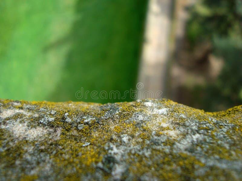 Close-up op een Muur met Mos royalty-vrije stock afbeeldingen