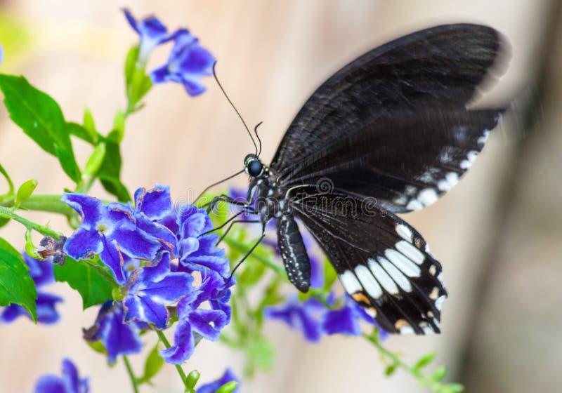Close-up op tropische butterlfy stock afbeeldingen