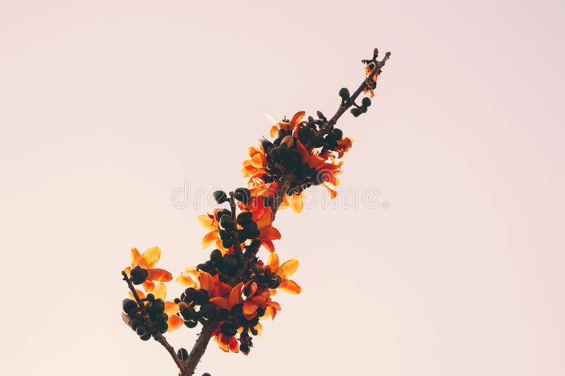 Close-up of Orange Flowers royalty free stock photos