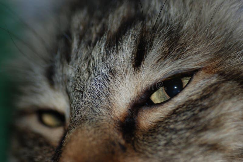 Close-up of an orange tabby cat face stock image