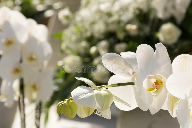 Close Up of Orchid Flower for Decoration of Wedding Day. On Blur Background, anniversary, beautiful, beauty, bloom, blossom, botanical, botany, bouquet, bright stock images