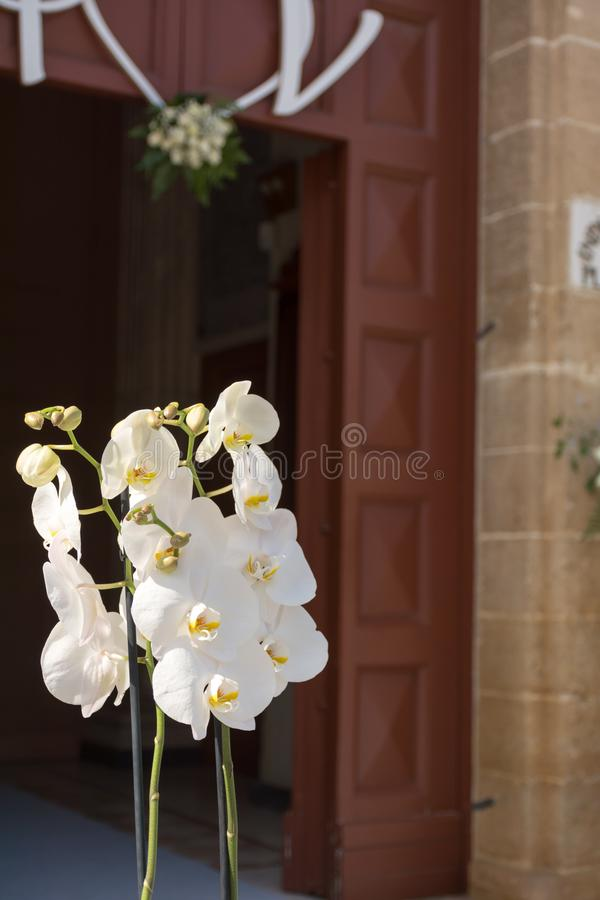 Close Up of Orchid Flower for Decoration of Wedding Day. On Blur Background, anniversary, beautiful, beauty, bloom, blossom, botanical, botany, bouquet, bright royalty free stock photography