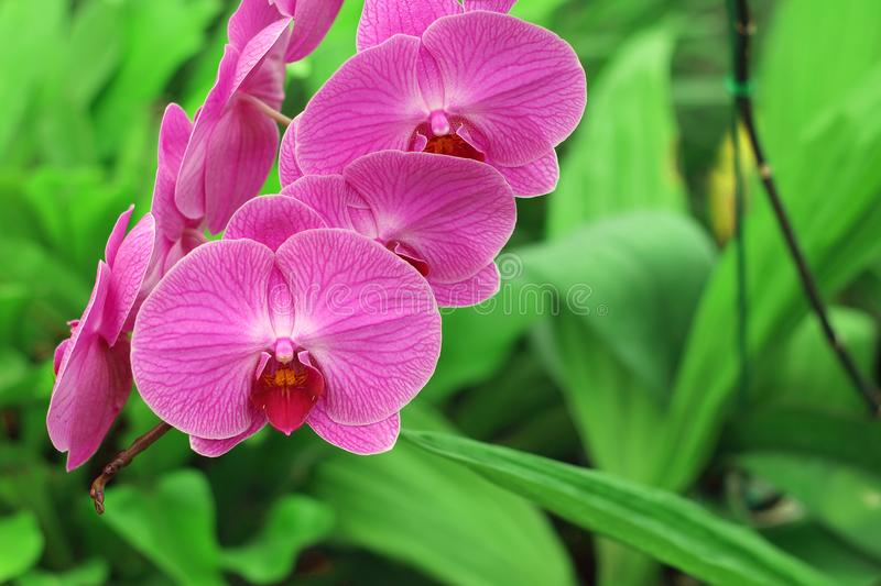 Close up of orchids bouquet with natural background. Close up of orchids bouquet with natural background, beautiful blooming orchid flower in the garden stock image